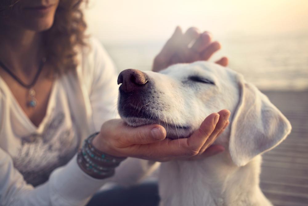 Cientistas brasileiros usam células-tronco mesenquimais para tratar cães com lesão medular