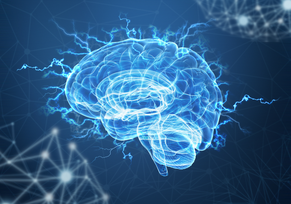 Mini-cérebros criados a partir de células-tronco ajudam a desvendar a trajetória percorrida por  neurônios durante o desenvolvimento