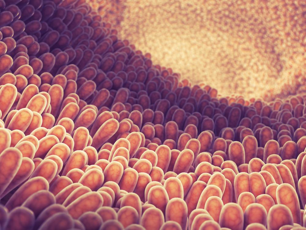 Células-tronco são usadas para criar intestino em laboratório