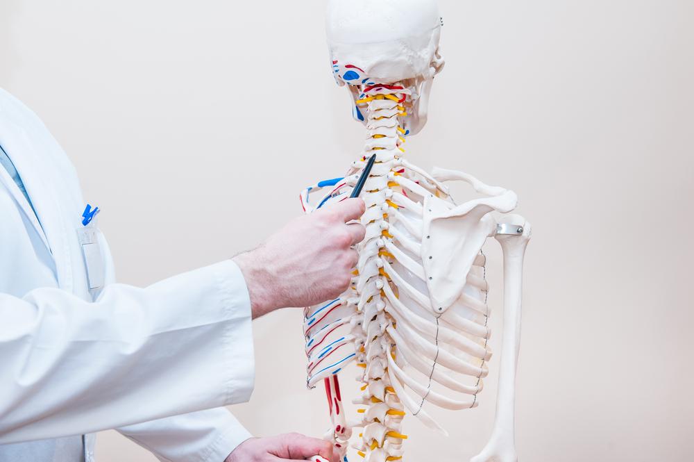 Células-tronco para o tratamento de lesão espinhal: mais uma boa notícia