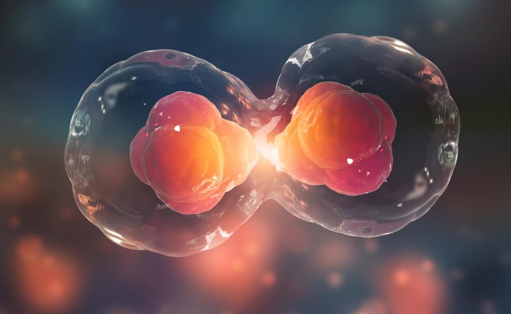 Medicina regenerativa além das células-tronco: transdiferenciação