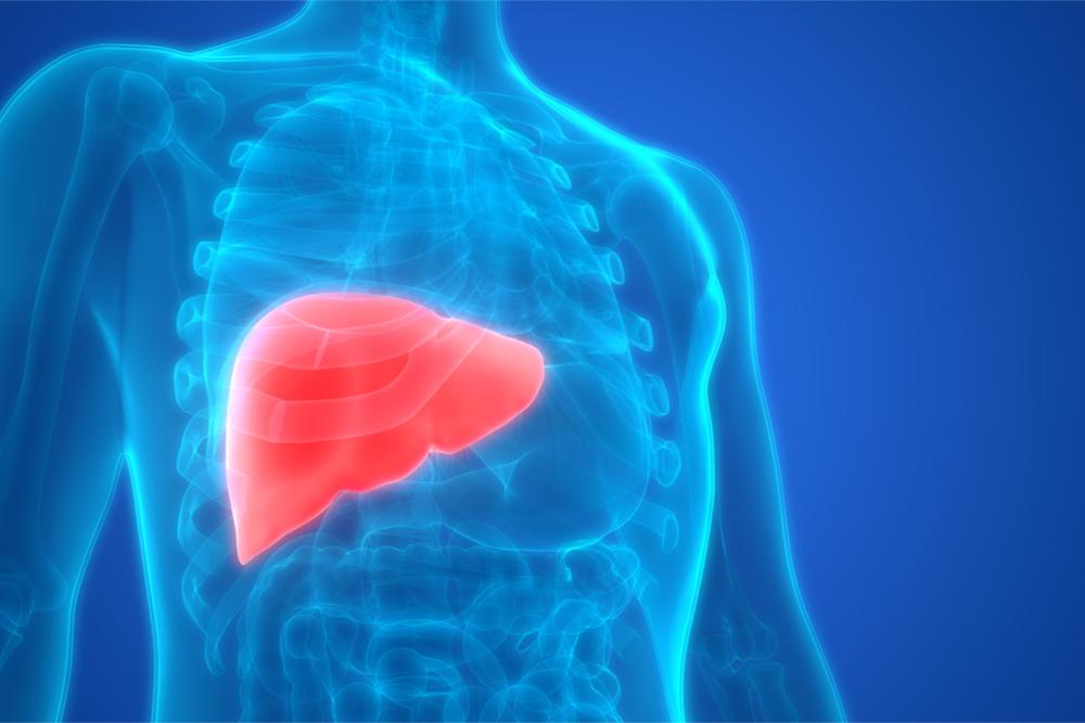 Células-tronco para tratar doenças do fígado