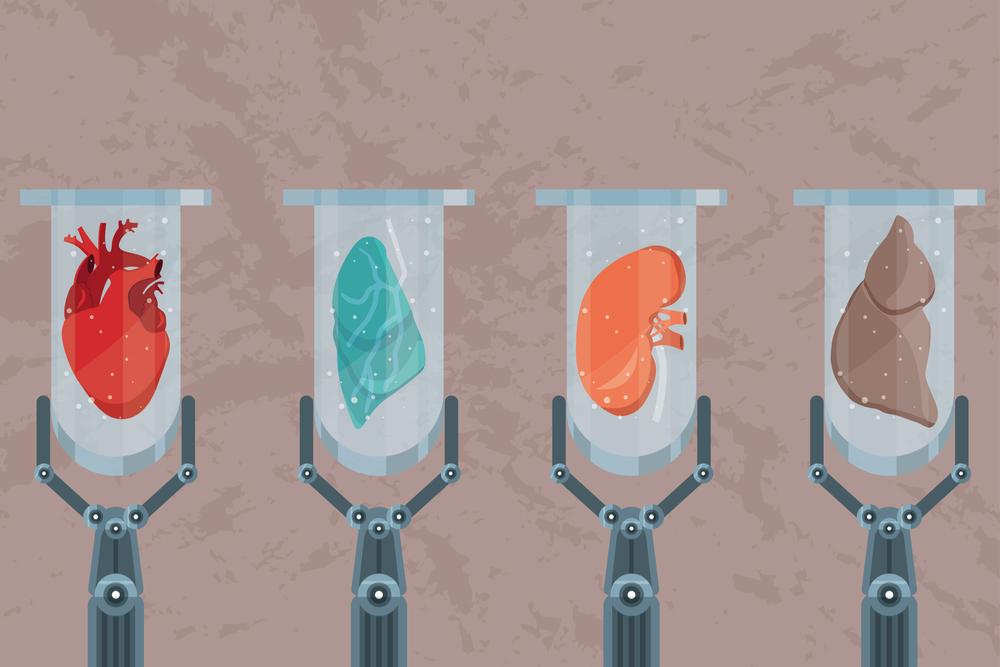 O uso das técnicas de descelularização e recelularização para a construção de tecidos e órgãos