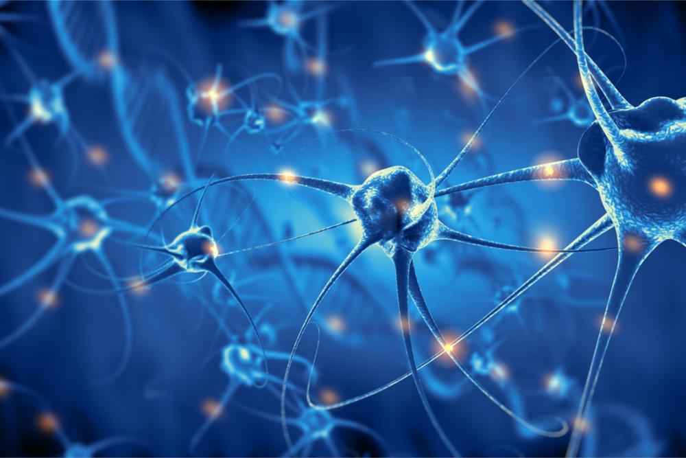 Gel feito de colágeno de pele de tilápia tem propriedades mecânicas similares às do cérebro humano e influencia a diferenciação de células-tronco em neurônios