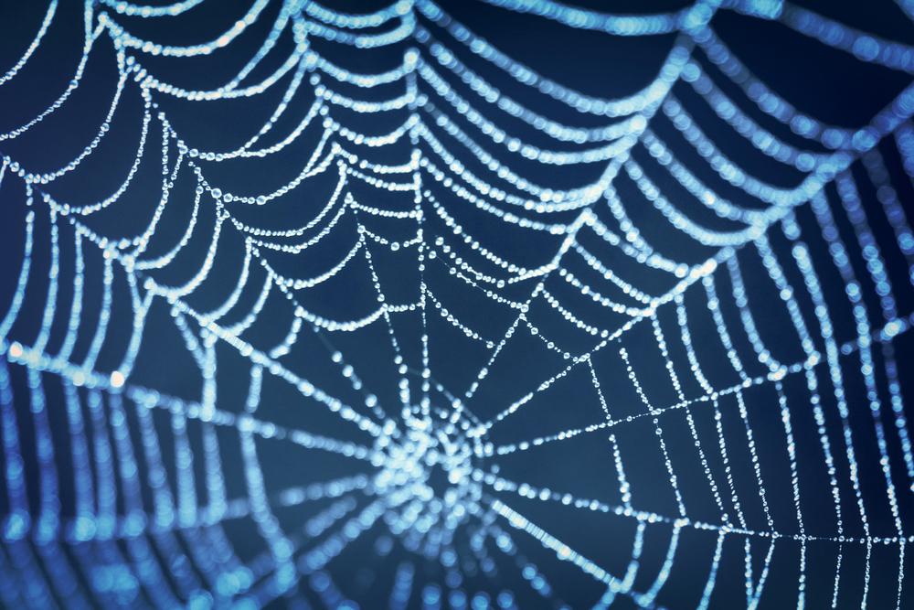 Seda da teia de aranhas: um inusitado biomaterial para o cultivo de células-tronco