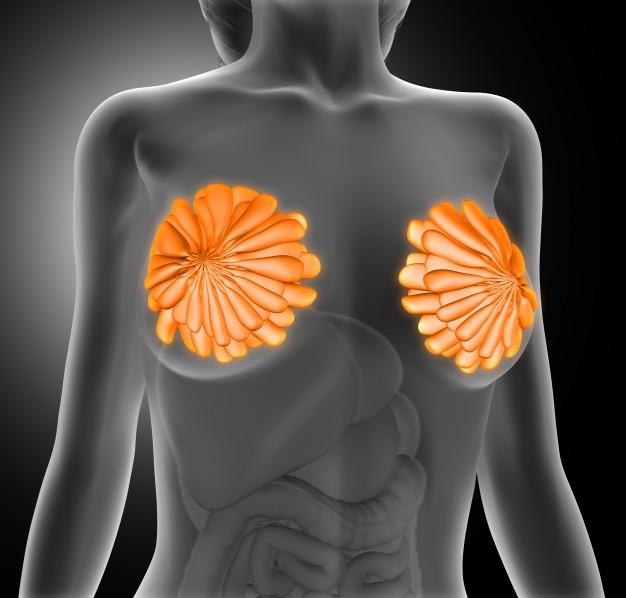 Células-tronco dentárias podem ser usadas para a regeneração de glândulas mamárias