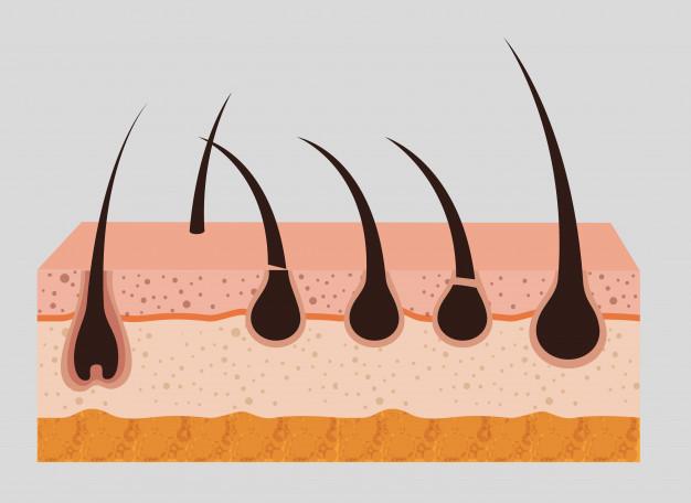 Organoides podem auxiliar na recuperação de lesões na pele e até mesmo no tratamento da calvície