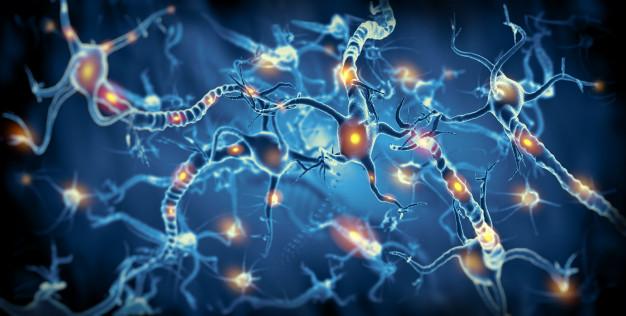 """Plataforma para estudo de terapias para a esclerose lateral amiotrófica é desenvolvida a partir de células-tronco e tecnologia de """"órgãos em chips"""""""
