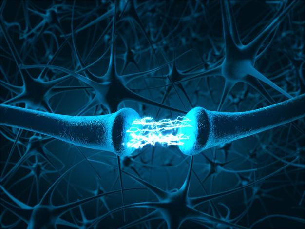 Células-tronco podem regenerar o nervo óptico